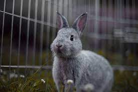 Sader arrancó campaña de vacunación de conejos mascota en todo el país (22:30 h)