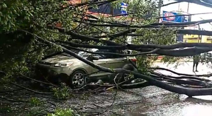 Camioneta queda atrapada entre ramas de un árbol que fue derribado por los vientos (16:00 h)